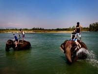 Elephant bath Chitwan