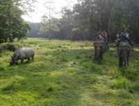 Chitwan jungle walk