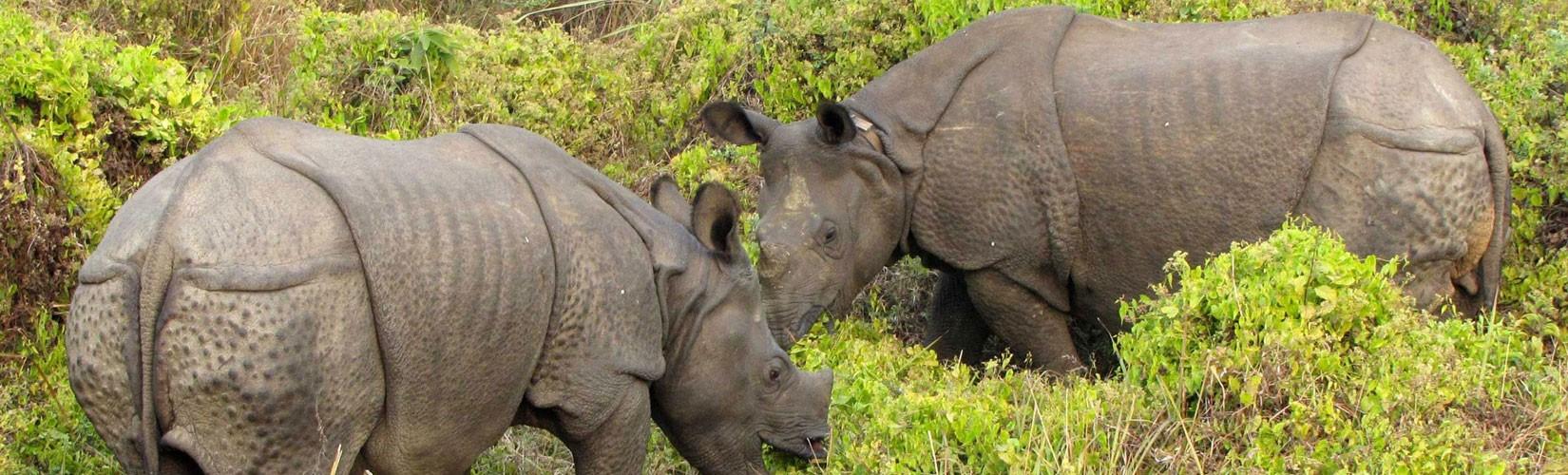 Chitwan Wildlife Tour